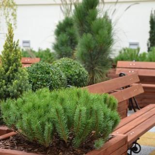 Donice drewniane na patio